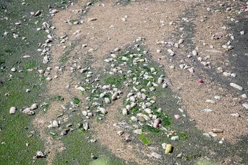Phát hiện bãi thải ven sông Hồng ngập trắng bao cao su 3