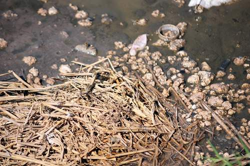 Phát hiện bãi thải ven sông Hồng ngập trắng bao cao su 6