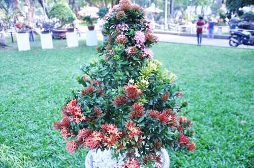 Ngắm cây dâu hàng chục năm tuổi trái sum suê, chín mọng ở SG 14
