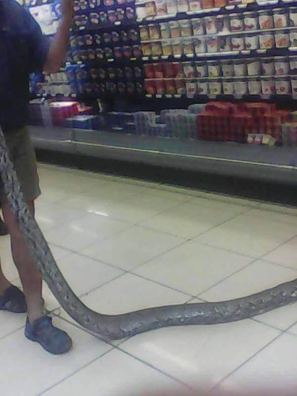 """Tá hỏa thấy trăn """"khủng"""" châu Phi trong tủ mát siêu thị 5"""