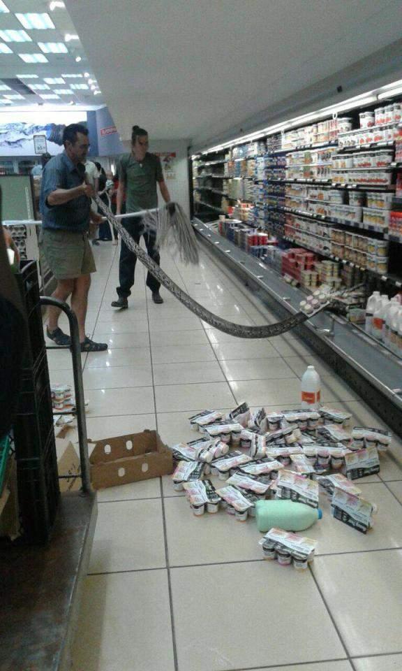 """Tá hỏa thấy trăn """"khủng"""" châu Phi trong tủ mát siêu thị 1"""