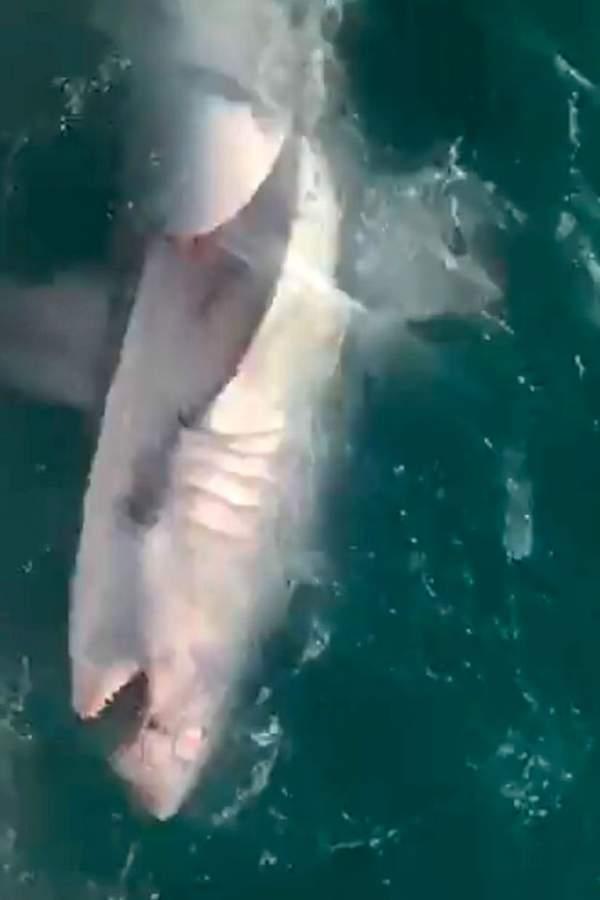 Anh: Người đàn ông bắt cá mập chỉ bằng cần câu 2