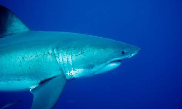 Truy lùng cá mập cắn chết cô gái 17 tuổi ở Úc 1