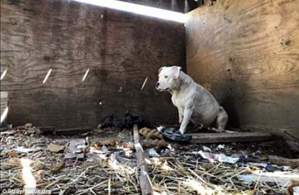 Mỹ: Chủ bị giết, chó tự nhai nát chân để tháo xích 1
