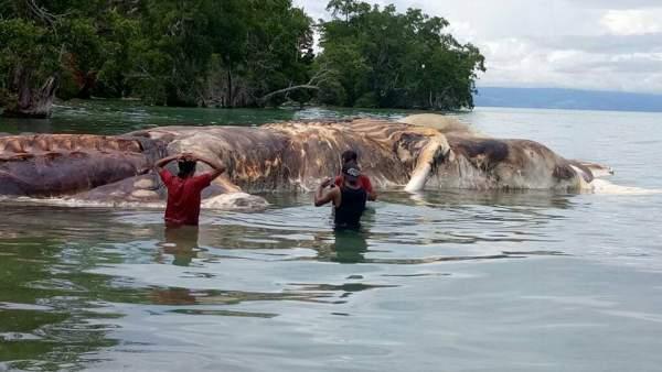 Xác quái vật khổng lồ gây hoang mang ở Indonesia 2