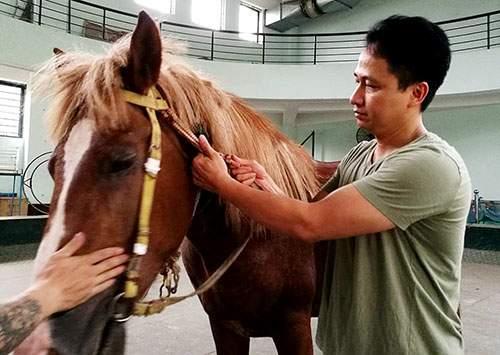 Sự thật tàn khốc ít người biết về những tiết mục xiếc ngựa 1