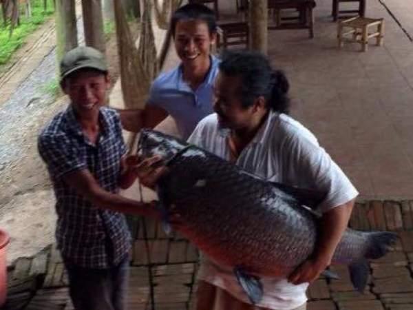 """Cần thủ câu được cá trắm đen """"khủng"""" 41kg ở lòng hồ sông Đà 3"""
