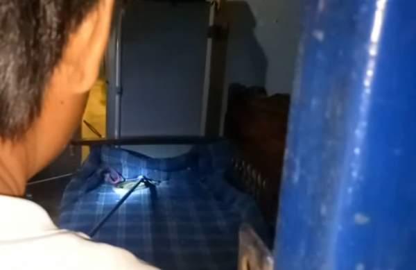 Thái Lan: Đang xem TV, thấy rắn hổ mang bò dưới cổ 1