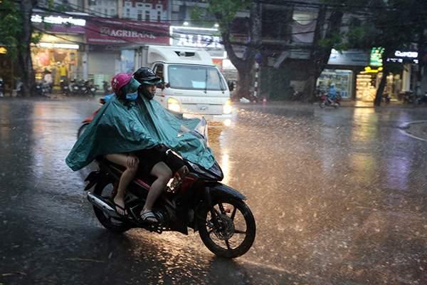 """Ảnh: Người Hà Nội sung sướng đi dưới """"mưa vàng"""" 1"""