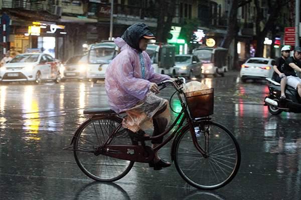 """Ảnh: Người Hà Nội sung sướng đi dưới """"mưa vàng"""" 11"""