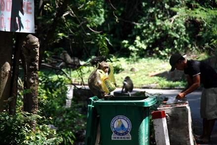 Chuyện kỳ lạ về đàn khỉ nương náu ngôi chùa ở Vũng Tàu 3