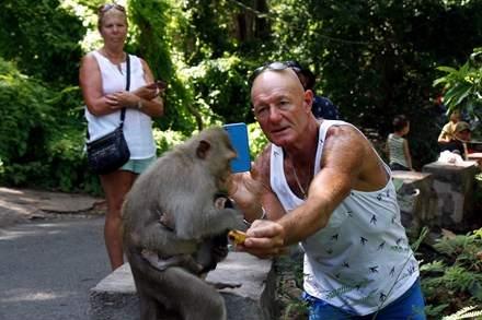 Chuyện kỳ lạ về đàn khỉ nương náu ngôi chùa ở Vũng Tàu 8