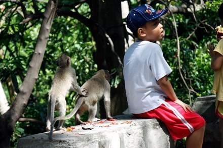 Chuyện kỳ lạ về đàn khỉ nương náu ngôi chùa ở Vũng Tàu 10