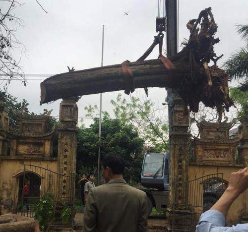 """""""Báu vật"""" 26 tỷ nằm chỏng trơ trong xó nhà đại gia Bắc Ninh 1"""