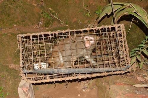 Được bạn tặng khỉ quý hiếm, người đàn ông giao nộp để bảo tồn 3