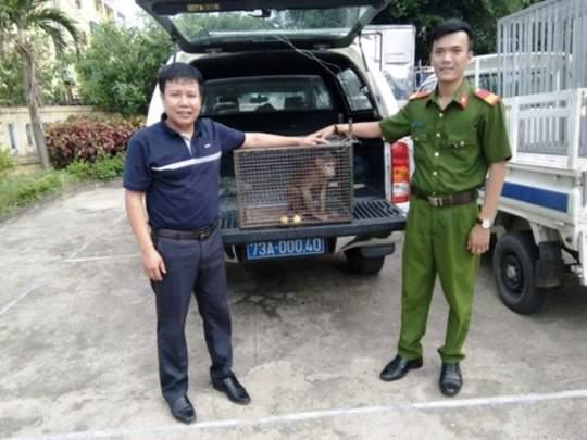 Được bạn tặng khỉ quý hiếm, người đàn ông giao nộp để bảo tồn 2