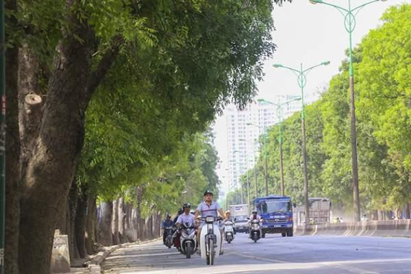 Chủ tịch Nguyễn Đức Chung: HN rất cân nhắc chặt hạ cây xanh 1