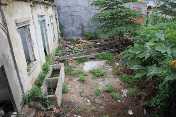 Biệt thự 100 tuổi hoang phế thành nơi trú ngụ của mèo hoang 11