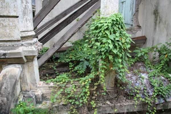 Biệt thự 100 tuổi hoang phế thành nơi trú ngụ của mèo hoang 4