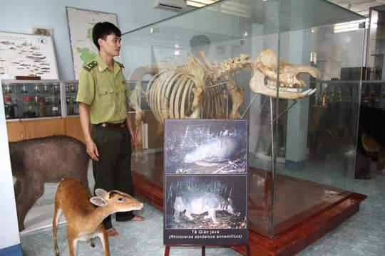 Chiêm ngưỡng bộ xương tê giác Java cuối cùng của Việt Nam 1