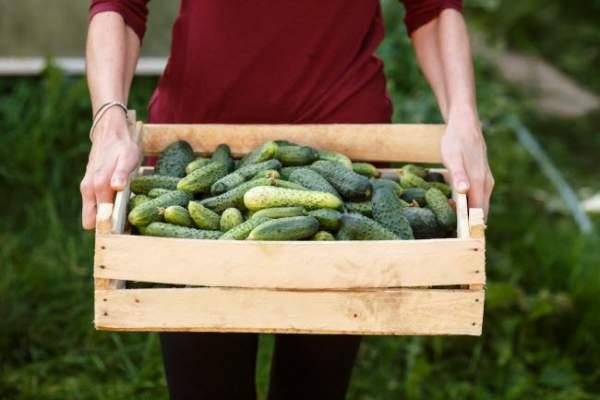 10 thực phẩm hằng ngày giúp cơ thể giải độc tự nhiên