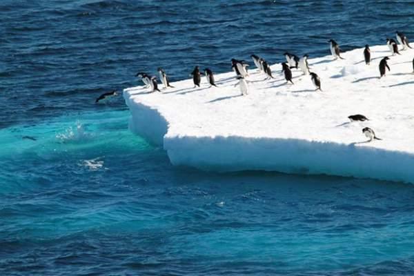 Nam Cực ghi nhận tình trạng tuyết rơi kỷ lục do... Trái đất nóng lên 1