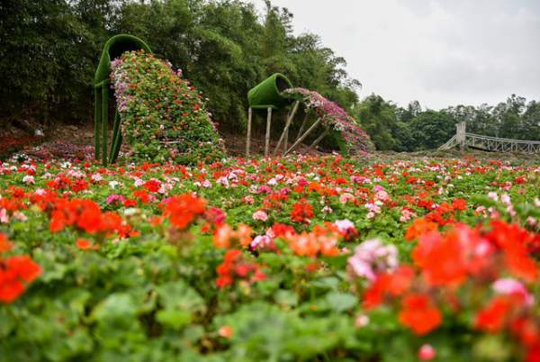 Ngắm nhìn khu vườn 70.000 m2 rực rỡ sắc hoa ở Hà Nội 6