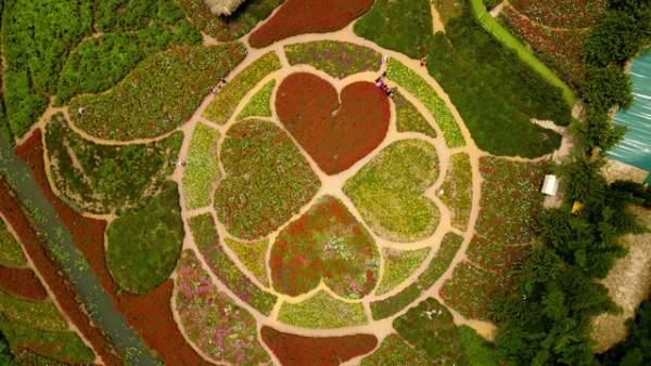 Ngắm nhìn khu vườn 70.000 m2 rực rỡ sắc hoa ở Hà Nội 9