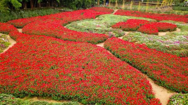 Ngắm nhìn khu vườn 70.000 m2 rực rỡ sắc hoa ở Hà Nội 4