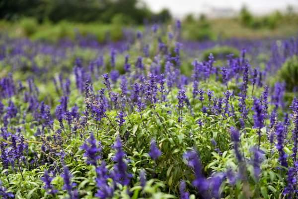 Ngắm nhìn khu vườn 70.000 m2 rực rỡ sắc hoa ở Hà Nội 5