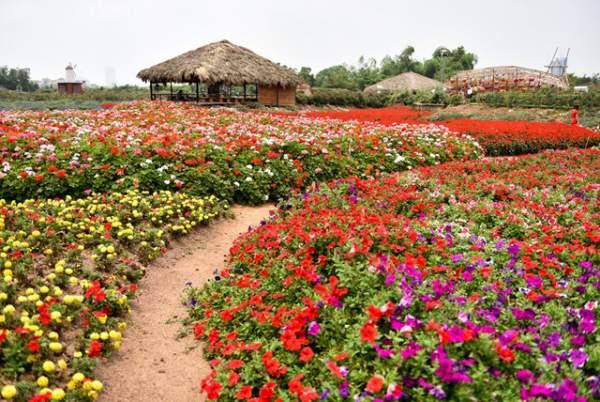 Ngắm nhìn khu vườn 70.000 m2 rực rỡ sắc hoa ở Hà Nội 11