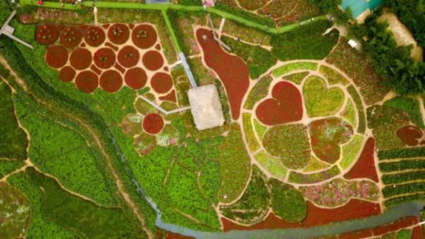 Ngắm nhìn khu vườn 70.000 m2 rực rỡ sắc hoa ở Hà Nội 2