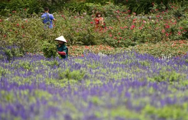 Ngắm nhìn khu vườn 70.000 m2 rực rỡ sắc hoa ở Hà Nội 14