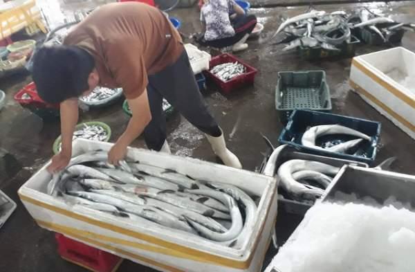 Bình minh ở bến cá lâu đời xứ Nghệ 8