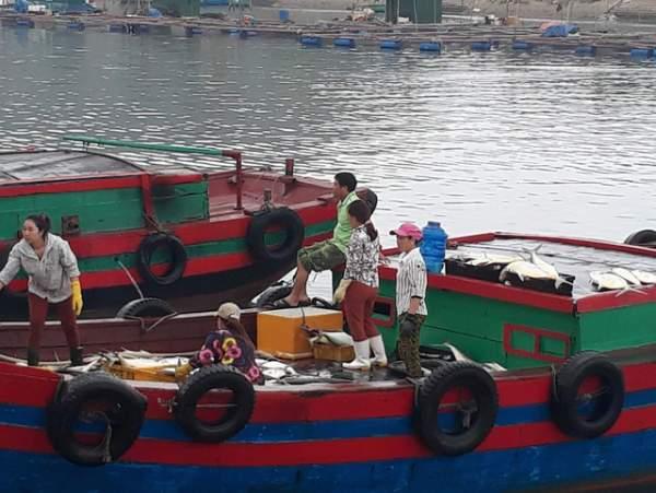 Bình minh ở bến cá lâu đời xứ Nghệ 1