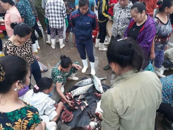 Bình minh ở bến cá lâu đời xứ Nghệ 5