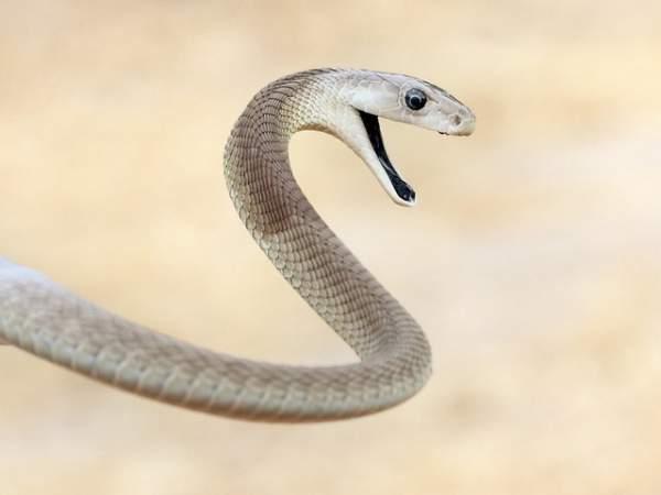 10 loài động vật nguy hiểm nhất thế giới 6