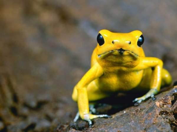 10 loài động vật nguy hiểm nhất thế giới 3
