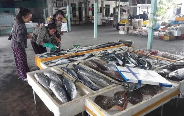 Bình minh ở bến cá lâu đời xứ Nghệ 4