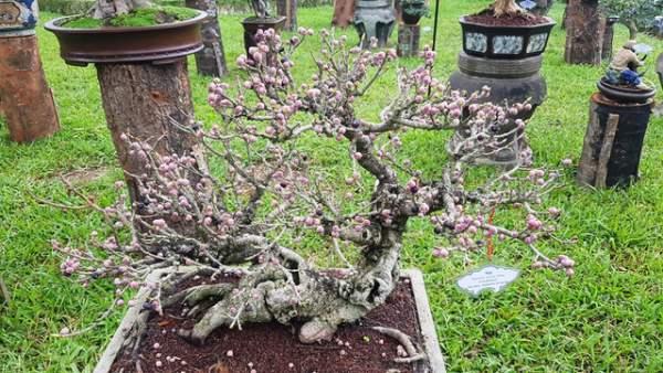 Hơn 1.000 cây kiểng, phong lan tỏa hương sắc tại Hoàng cung Huế 9