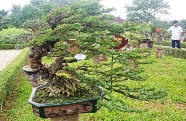 Hơn 1.000 cây kiểng, phong lan tỏa hương sắc tại Hoàng cung Huế 8