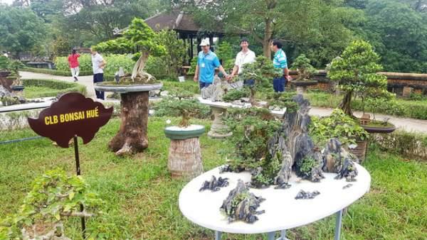 Hơn 1.000 cây kiểng, phong lan tỏa hương sắc tại Hoàng cung Huế 6