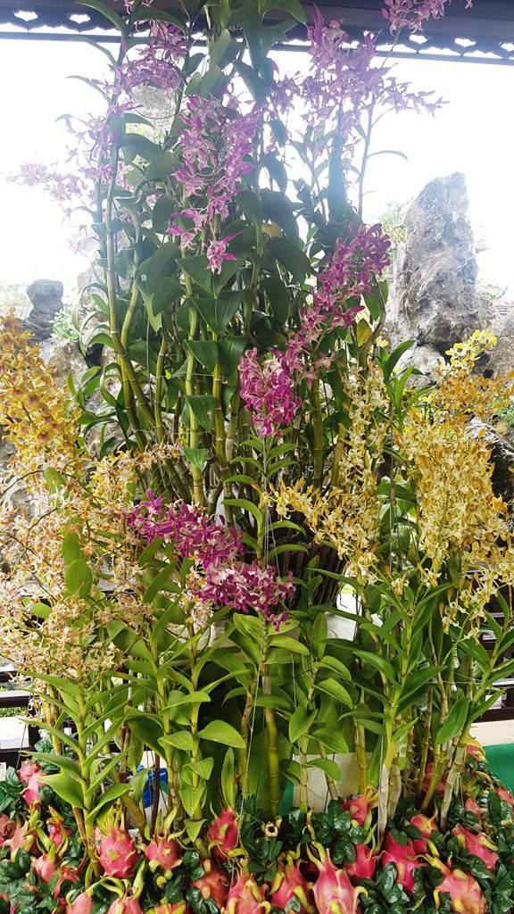 Hơn 1.000 cây kiểng, phong lan tỏa hương sắc tại Hoàng cung Huế 14