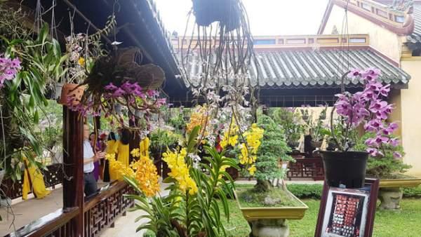 Hơn 1.000 cây kiểng, phong lan tỏa hương sắc tại Hoàng cung Huế 13