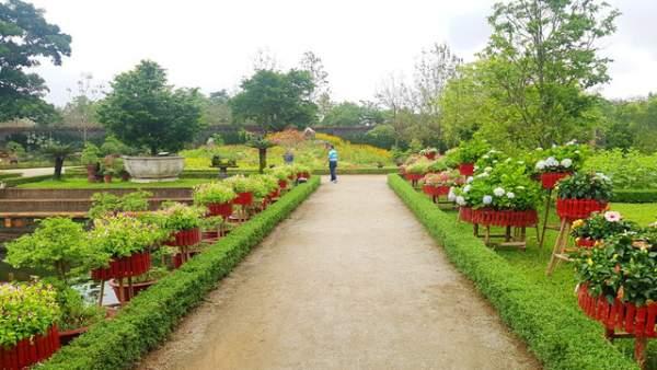 Hơn 1.000 cây kiểng, phong lan tỏa hương sắc tại Hoàng cung Huế 4