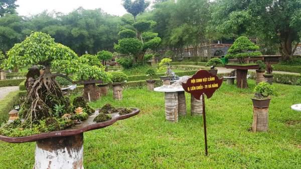 Hơn 1.000 cây kiểng, phong lan tỏa hương sắc tại Hoàng cung Huế 7