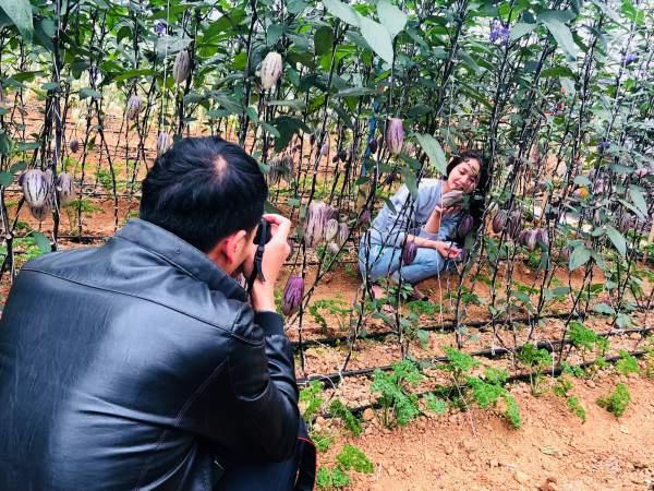 """Phát """"sốt"""" với vườn dưa pepino tím sai trĩu quả ở Đà Lạt 6"""
