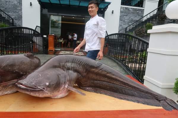 """Choáng với cặp cá leo """"khủng"""" nặng hơn 1 tạ xuất hiện ở Bắc Ninh 3"""