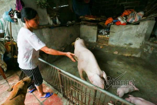 Vợ chồng ông chủ ngày ngày chèo thuyền thăm 100 con lợn đi lánh lũ 6