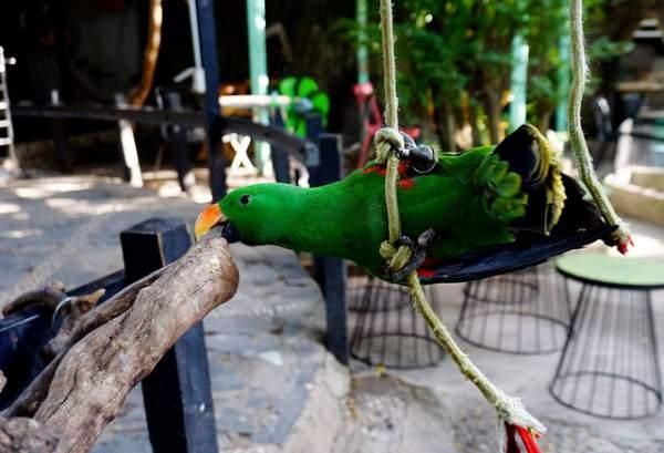 Thích thú với quán cà phê nuôi đầy vẹt ở Sài Gòn 3